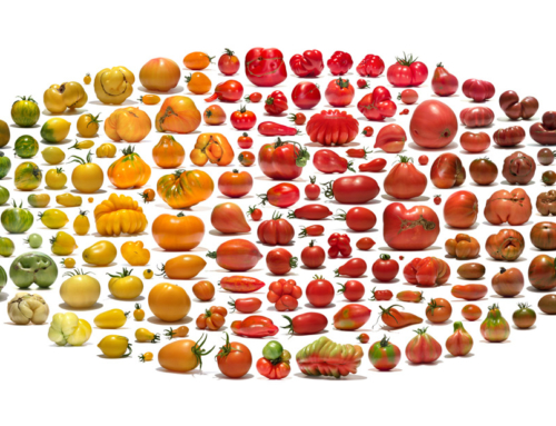 The beauty of agrobiodiversity